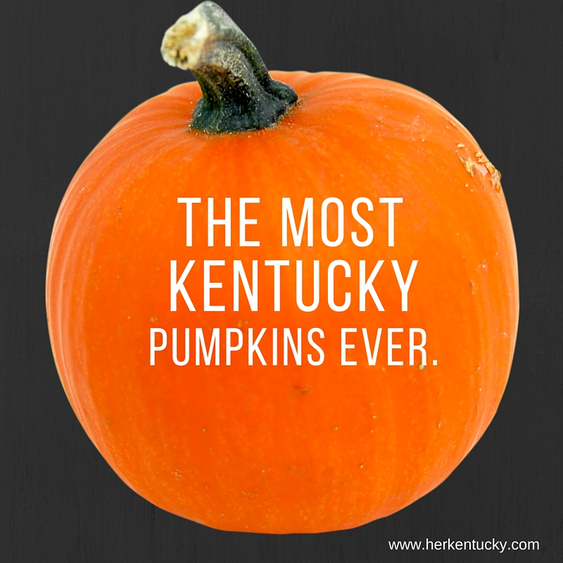 The most Kentucky pumpkins ever. | HerKentucky.com