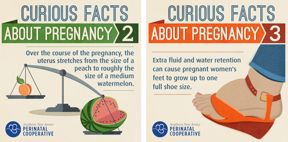 CuriousFactsGraphic2and3.png