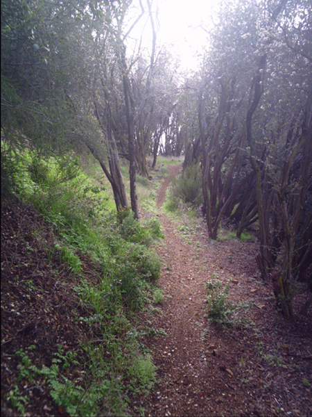 Another favorite trail in SB - hard to find, fun to ride.