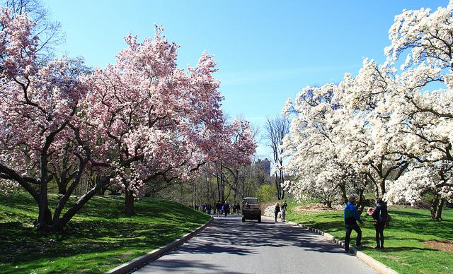 Botanical Gardens, Andrew Dallos