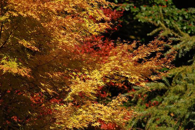 Botanical Gardens, Dave Pinter