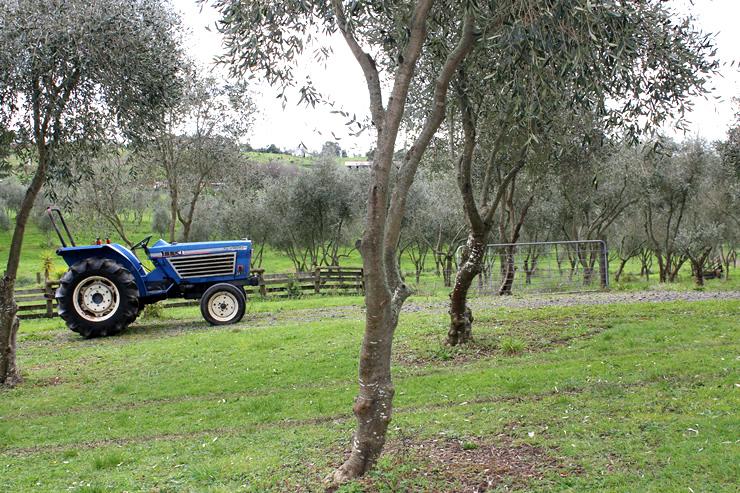 Jonio's Olive Grove - Te Kauwhata