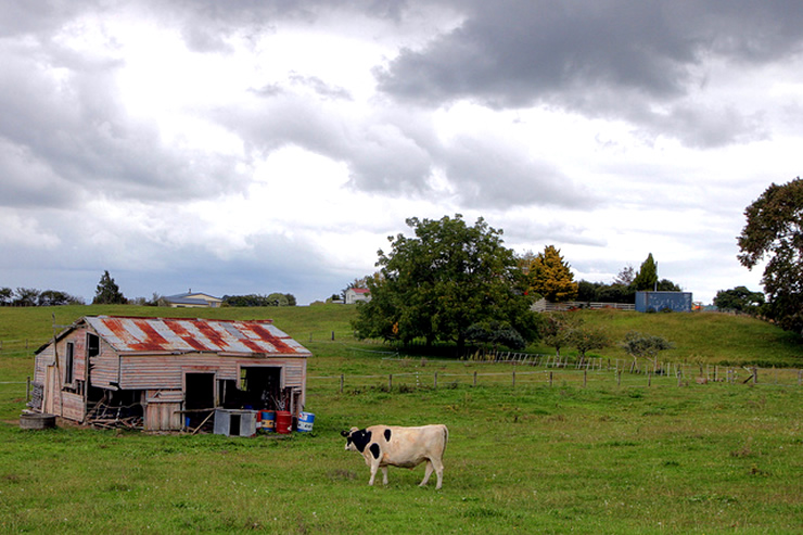 Te Kauwhata farmland