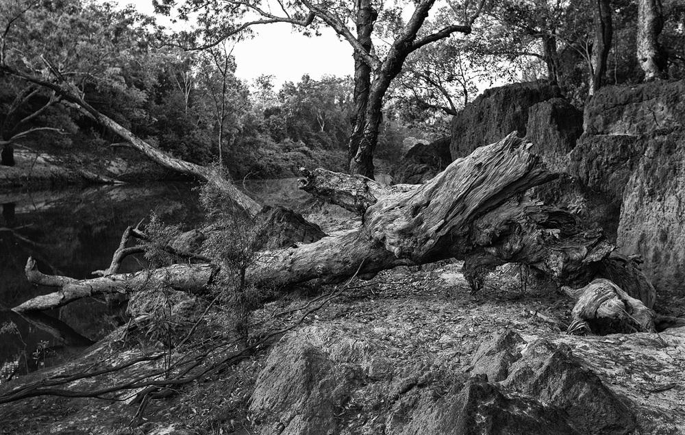 Steve Irwin Wildlife Reserve, Cape York.Australia             photography : Russell Shakespeare