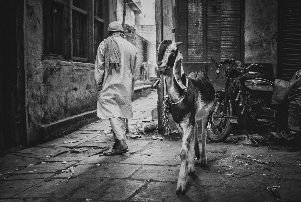 """Varanasi Goat, Old City""  photo copyright : Russell Shakespeare 2015"