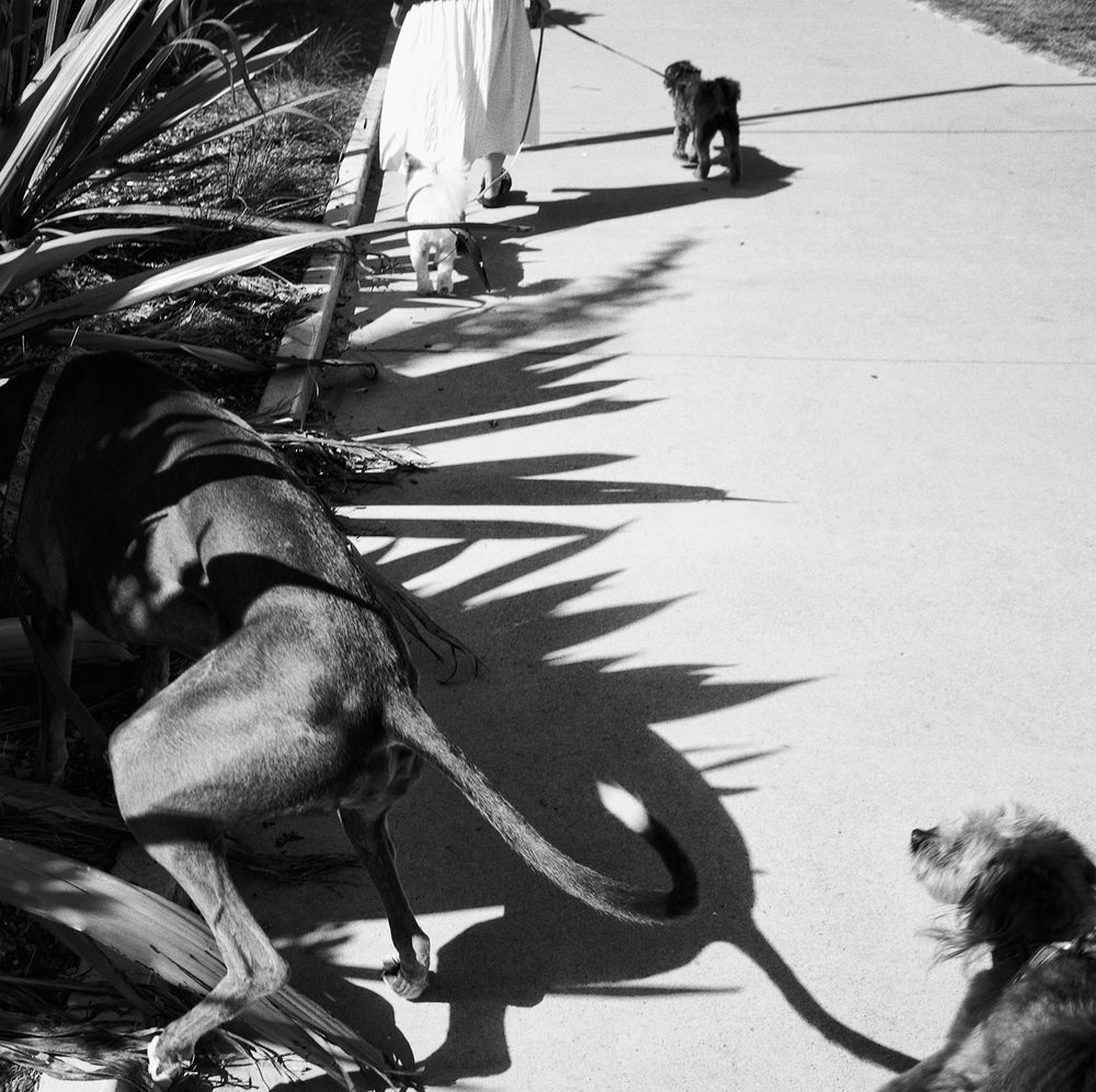 """Dogs, Palm Beach""     © Russell Shakespeare 2016"
