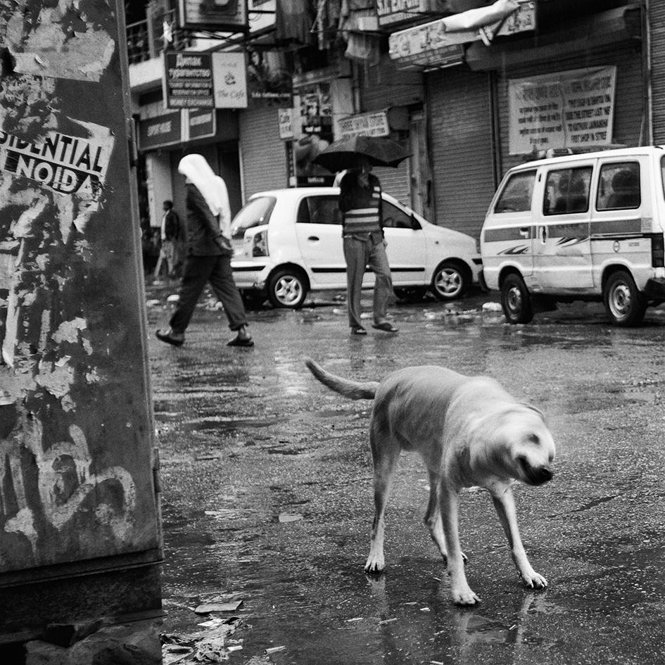 Wet Dog, Delhi, India                     © Russell Shakespeare 2015