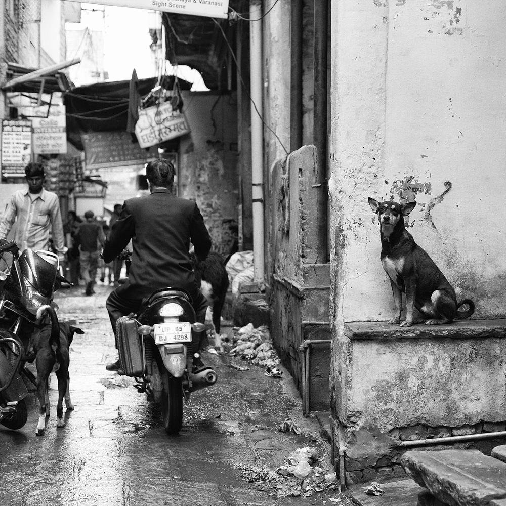 """"""" Dog on Wall, Varanasi, India""""   © Russell Shakespeare 2015"""