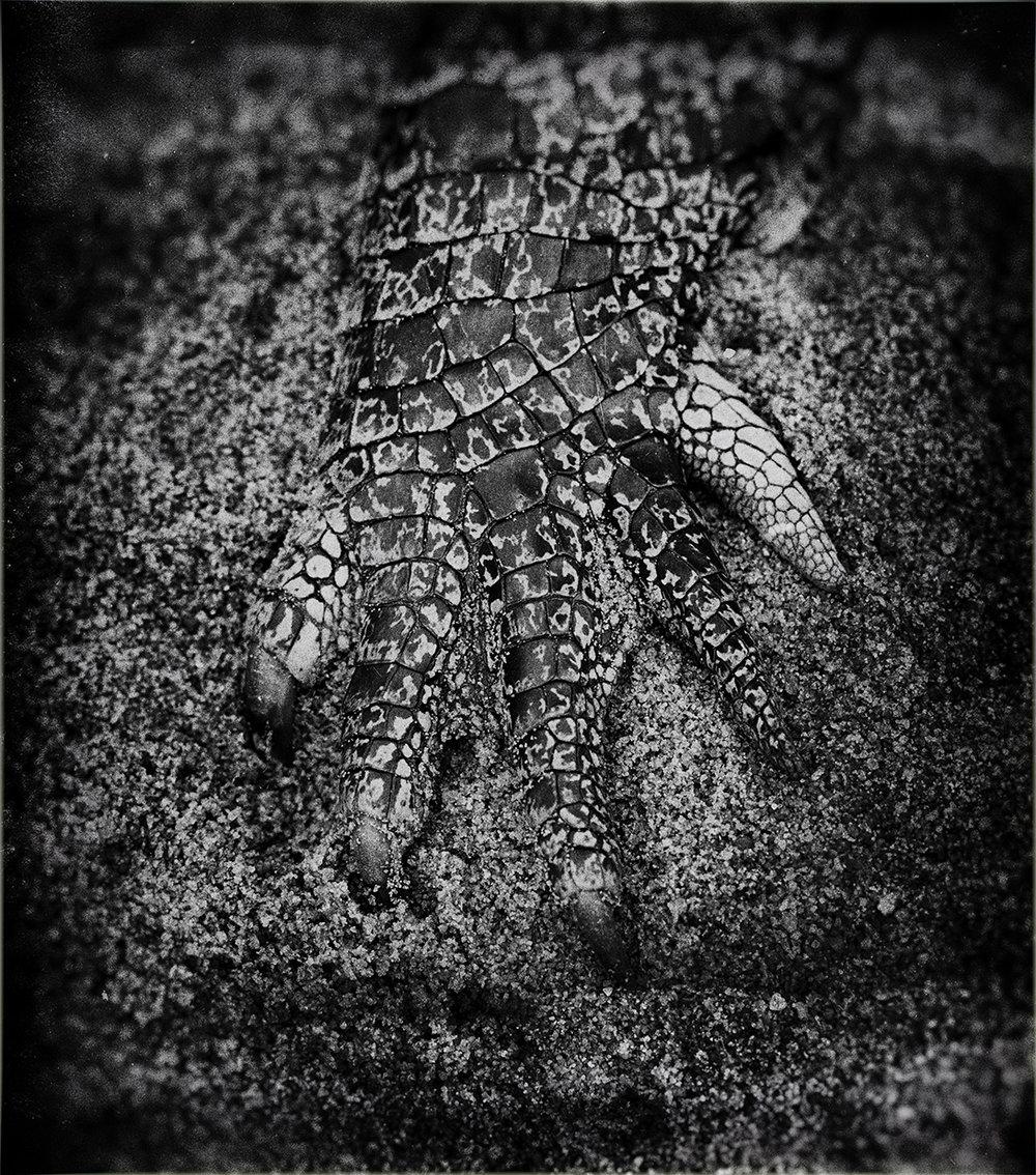 Steve Irwin Wildlife Reserve                        © Russell Shakespeare 2016