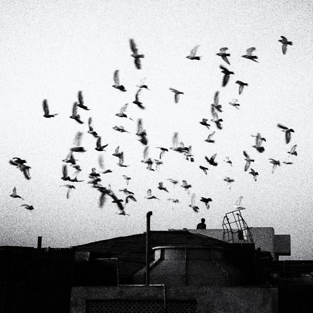 """""""Delhi""""          © Russell Shakespeare"""