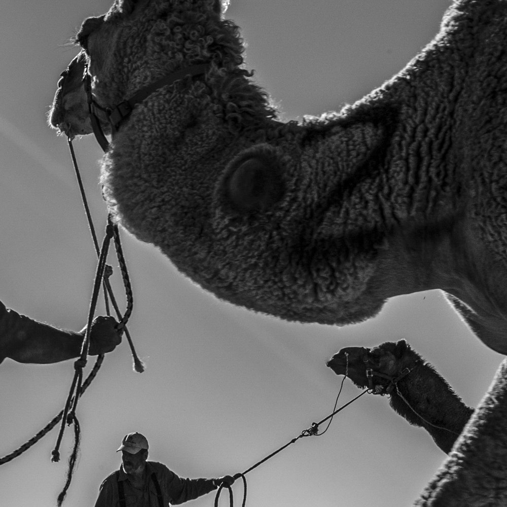 """""""Camel Racing, Bedourie""""                                   © Russell Shakespeare"""