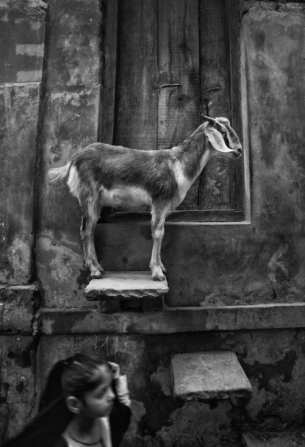 Varanasi, India .                                           ©Russell Shakespeare 2016