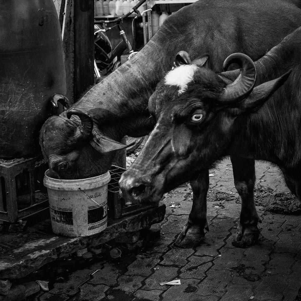Varanasi, India                                  ©Russell Shakespeare 2017