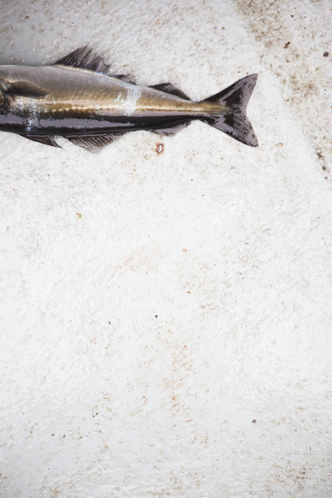 IMG_0111 fishing.jpg