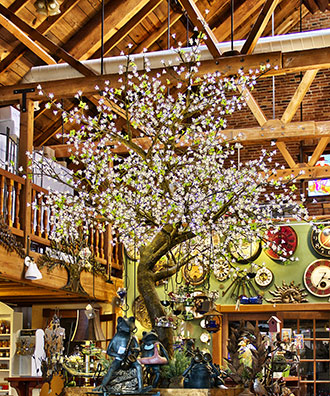 The beautiful tree inside the Tree House in Placerville