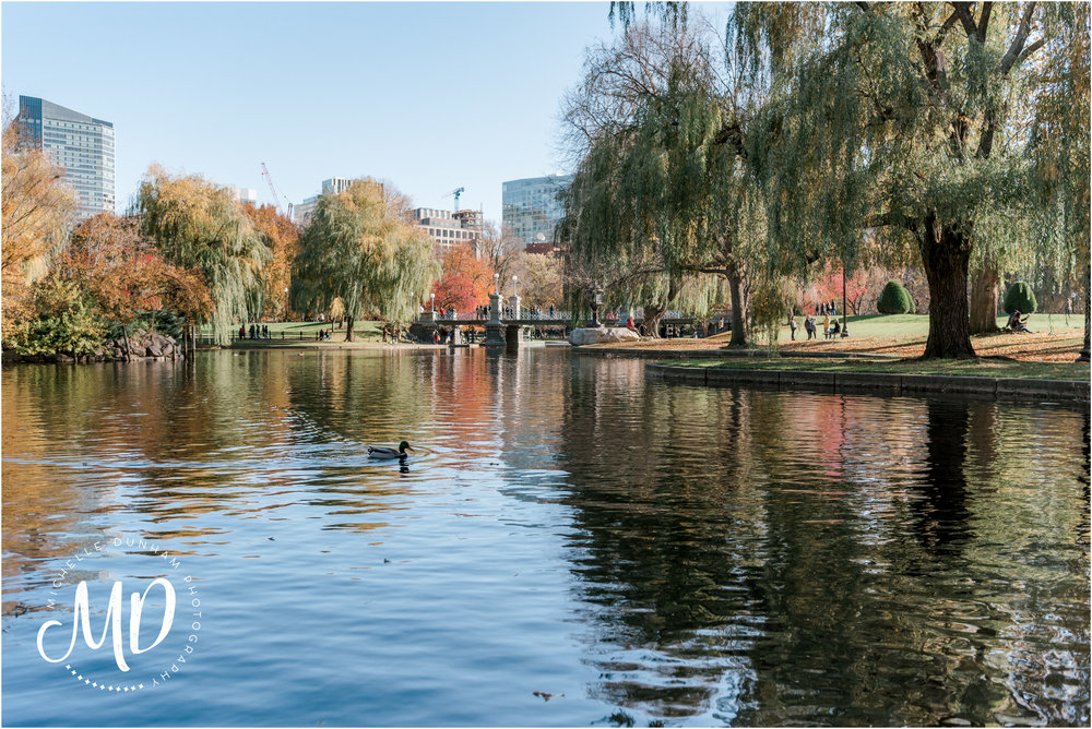 Michelle-Dunham-Photography-Engagement-Public-Garden-Boston-1.jpg