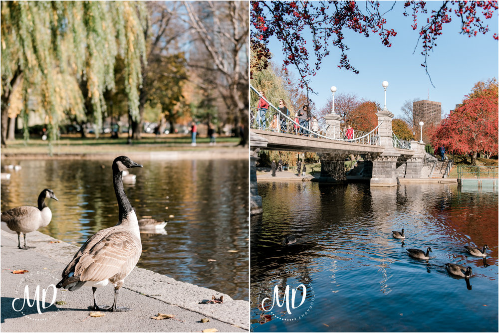 Michelle-Dunham-Photography-Engagement-Public-Garden-Boston-20.jpg