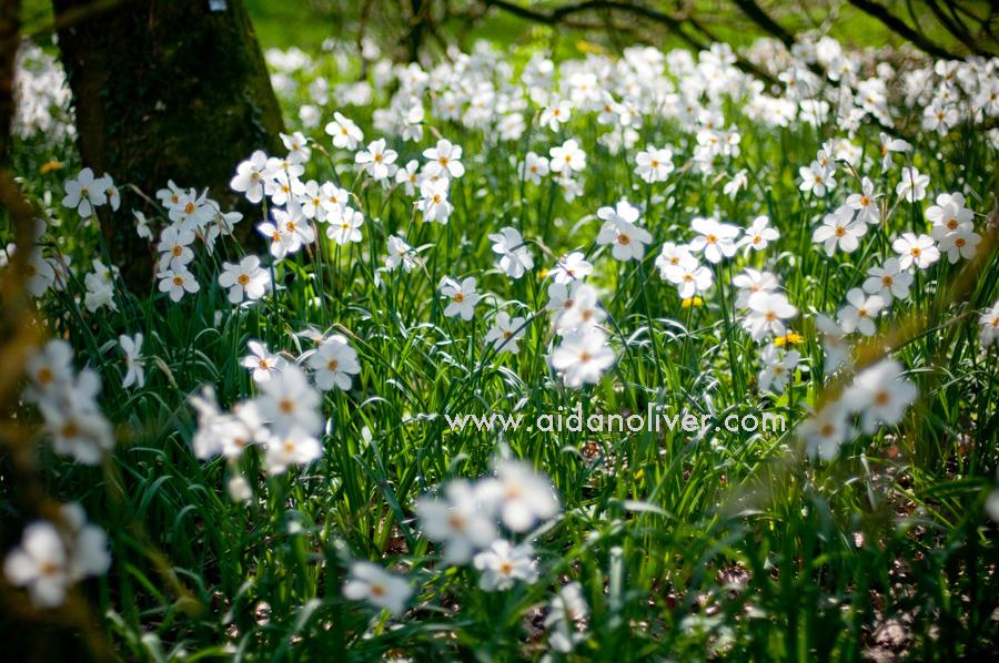 spring-2011_2.jpg
