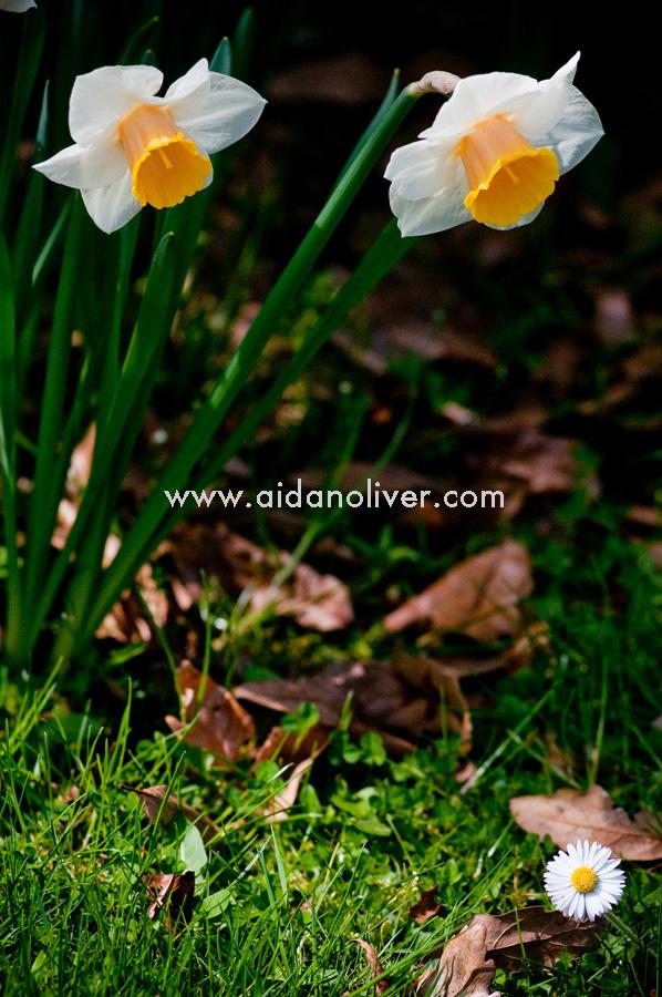 spring-2011_3.jpg