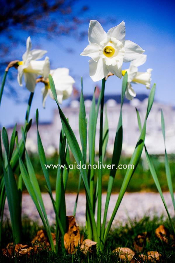spring-2011.jpg