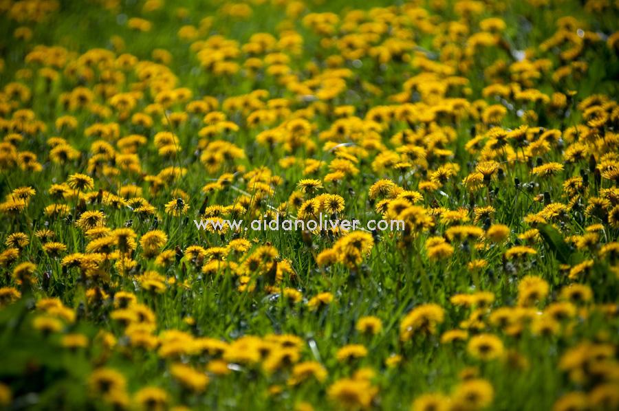 spring-2011_5.jpg