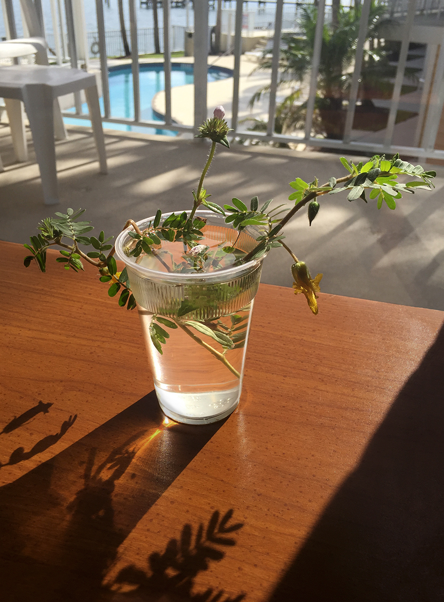 Plant in T's Hotel (After Funeral) , 2014, iPhone Photograph