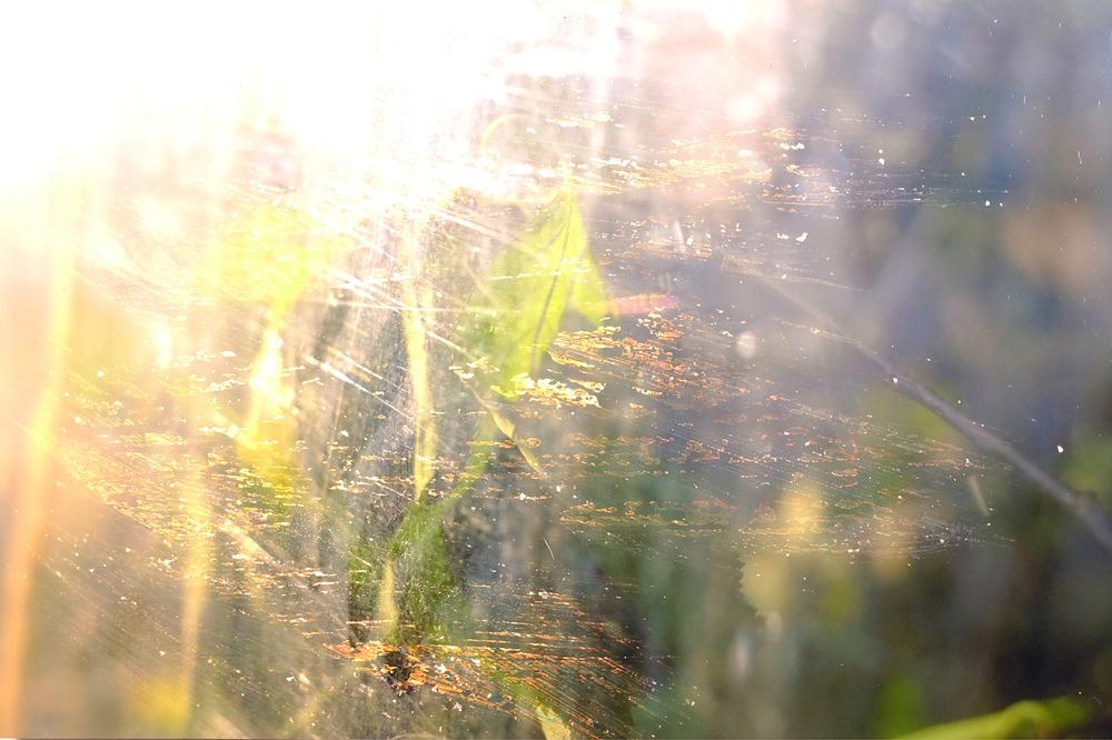 Plant, Korea , 2014, Bleach on Photograph