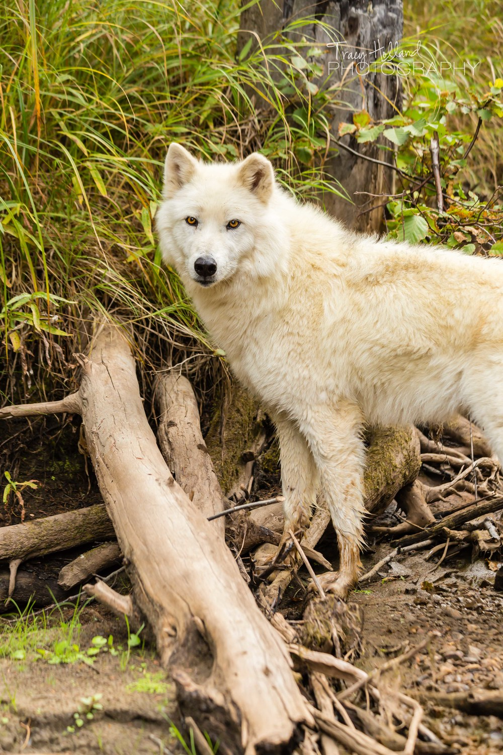 Wolf Project Blog-0620.jpg