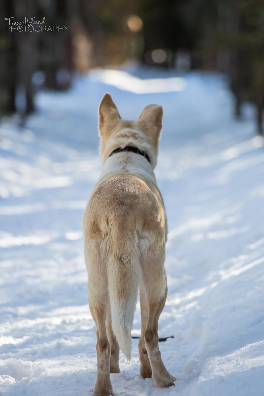140315 Sled Dogs-1019.jpg