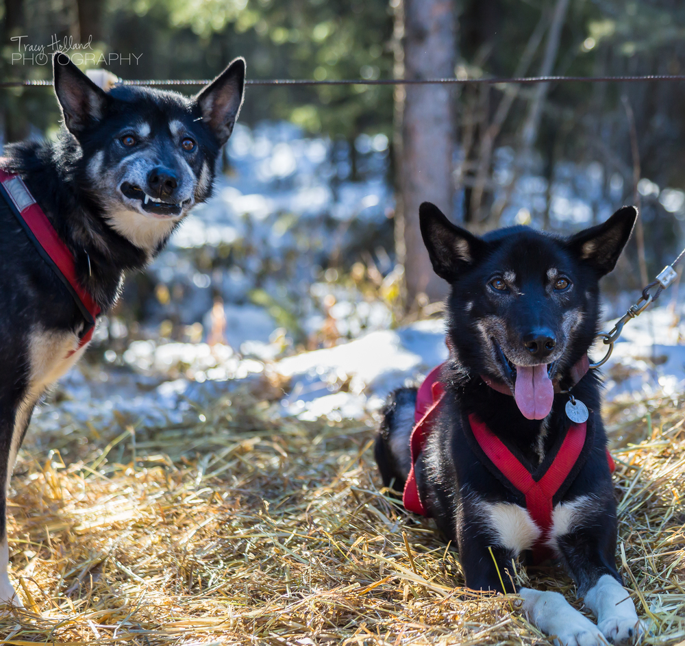 140315 Sled Dogs-0982.jpg
