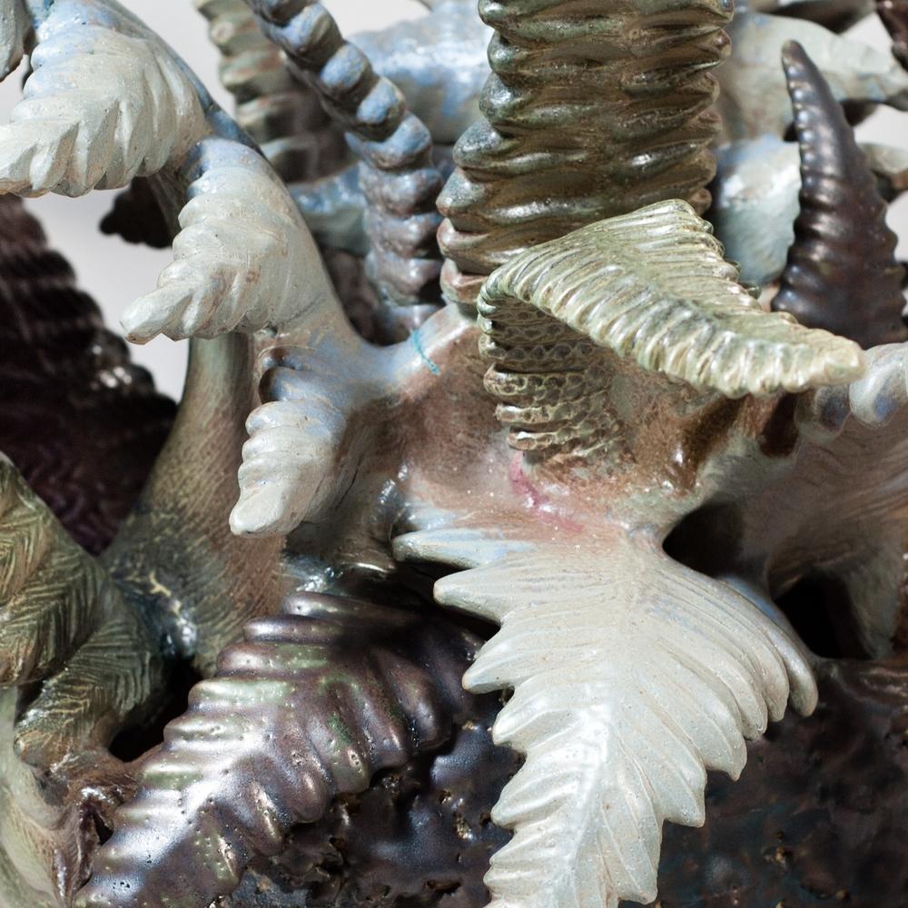 Ferns | Epiphytes
