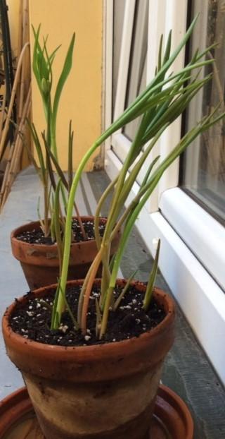 16-02 Plants 5 garden.JPG