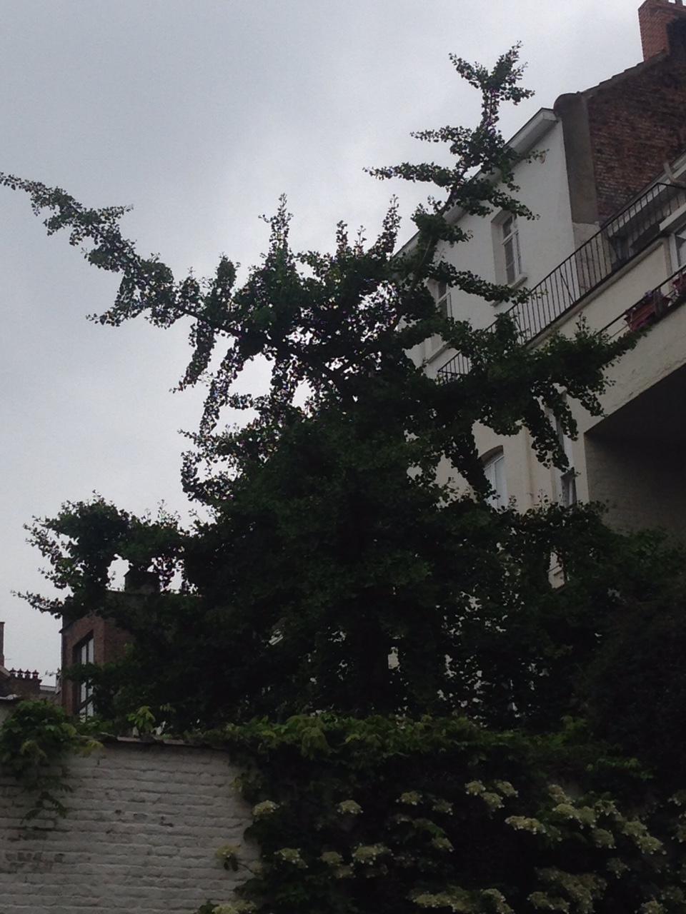 2016-05.b Backyard Tree.JPG
