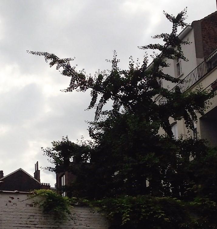 2016-06.c Backyard Tree.JPG