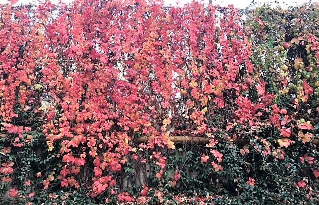 171104 autumn 2.JPG
