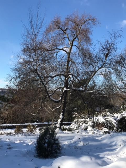 18-01 snow 4.JPG