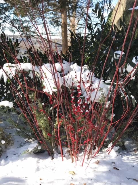 18-01 snow 6.JPG