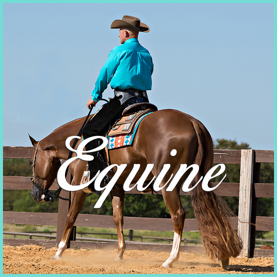 Equine Photography Ranch Calls Horse & Human Portraits Equine-Related Commercial  Photography