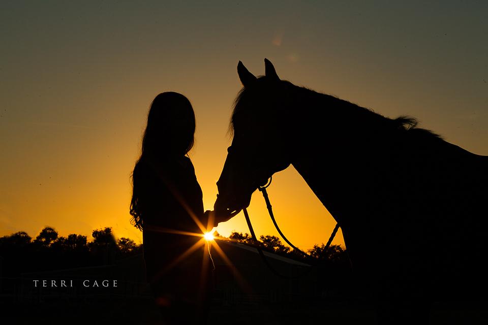 horse silhohette