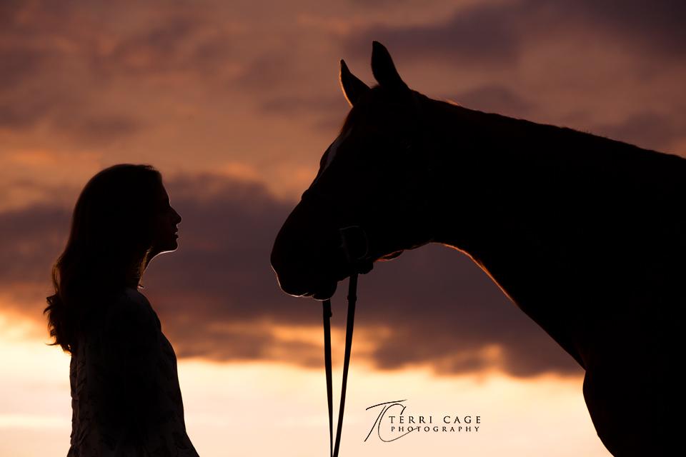silhouette, horse, senior