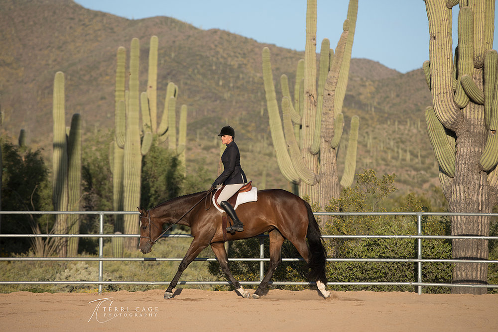 Hunter Under Saddle, saguaro cactus, AQHA, trot, horse, Scottsdale Arizona