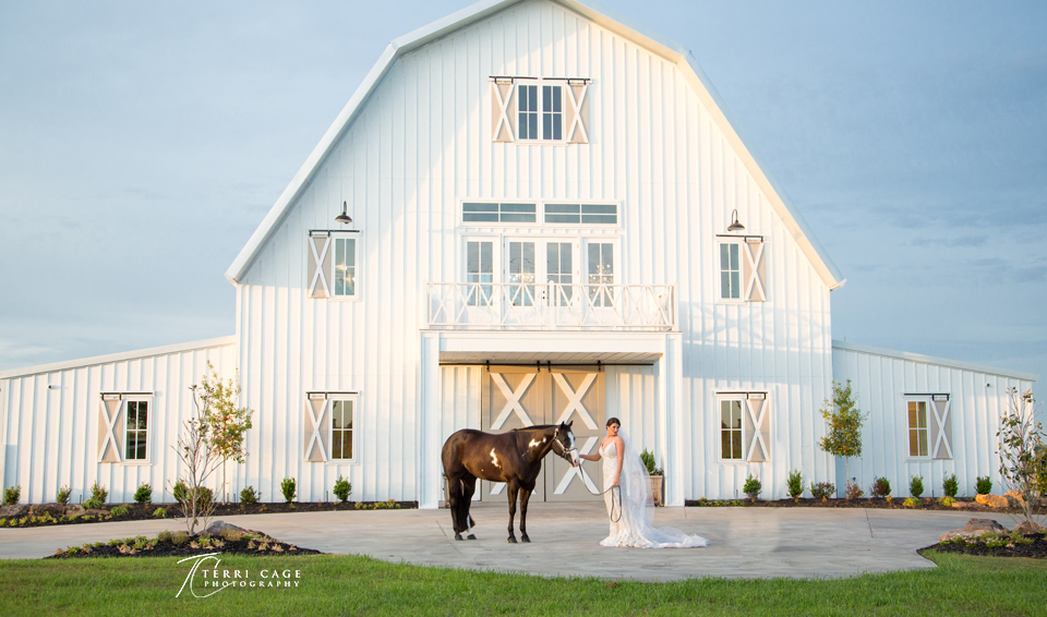 Equine Wedding