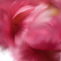 blush-test.png