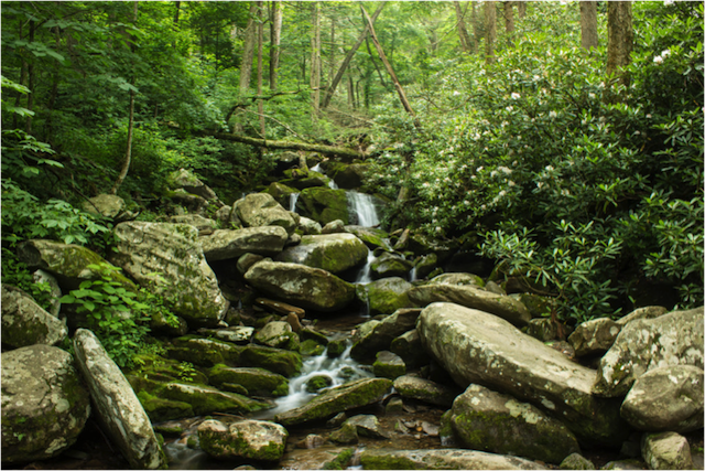 GREAT SMOKY MOUNTAINS BY A SOUTHERN GYPSY