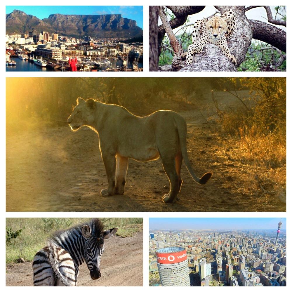 South africa table mountain johannesburg lion cheetah zebra