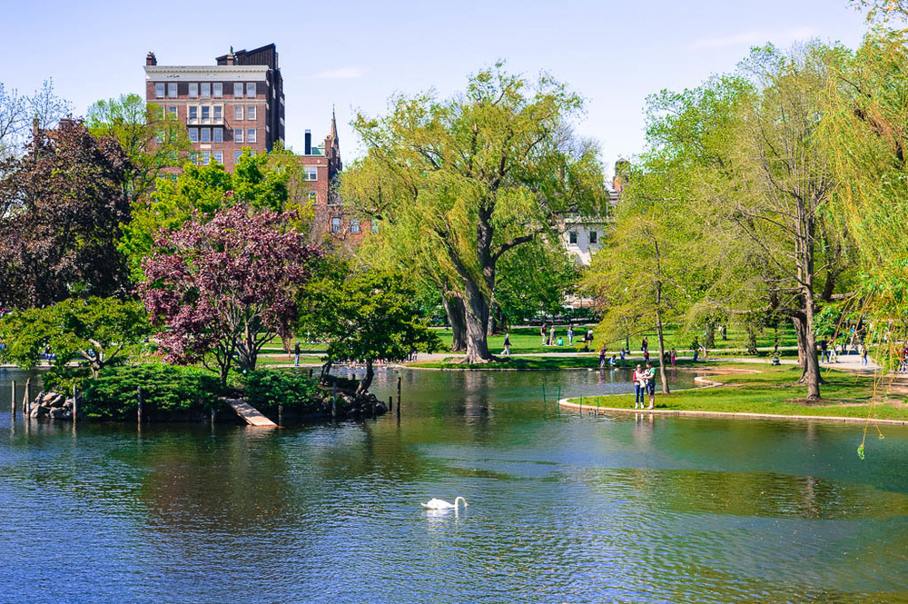 THE PUBLIC GARDENS IN BOSTON