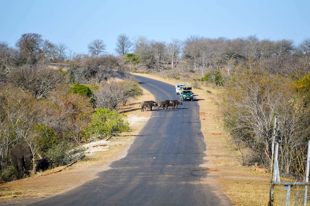 KRUGER NATIONAL PARK SAFARI