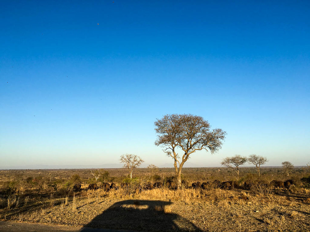 ON SAFARI IN THE KRUGER NATIONAL PARK