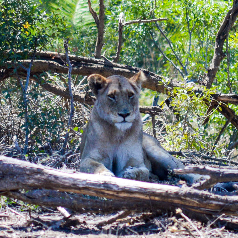 BIG FIVE ON SAFARI IN KRUGER NATIONAL PARK