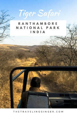 TIGER SAFARI IN RANTHAMBORE NATIONAL PARK INDIA